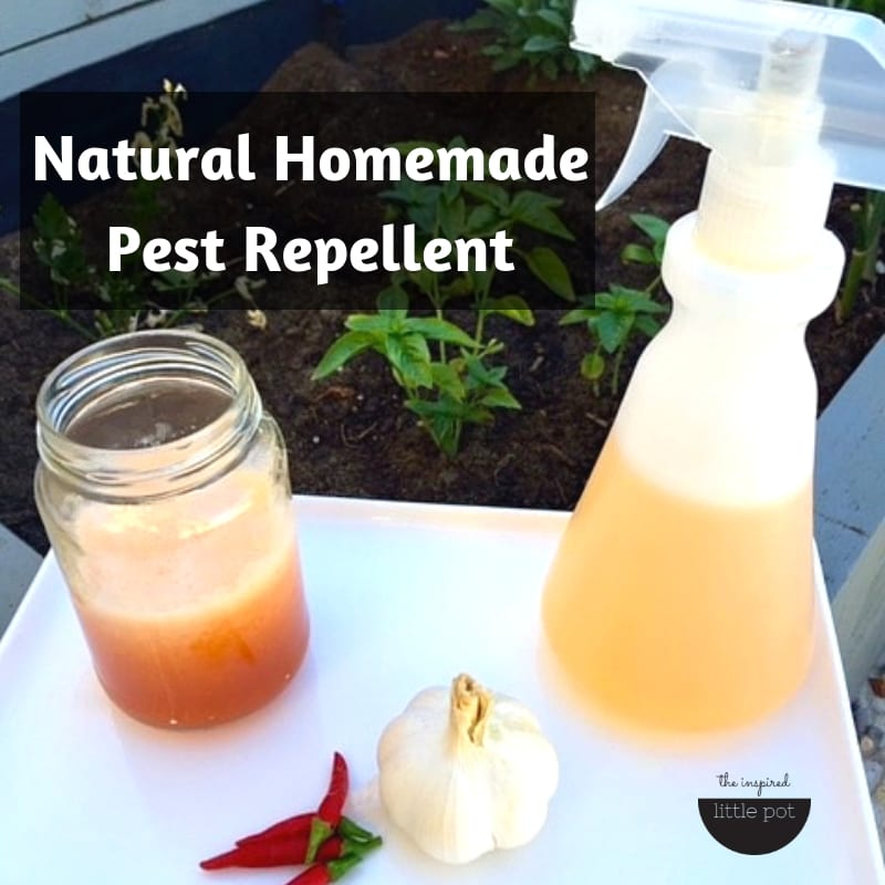 Natural Homemade Pest Repellent | The Inspired Little Pot