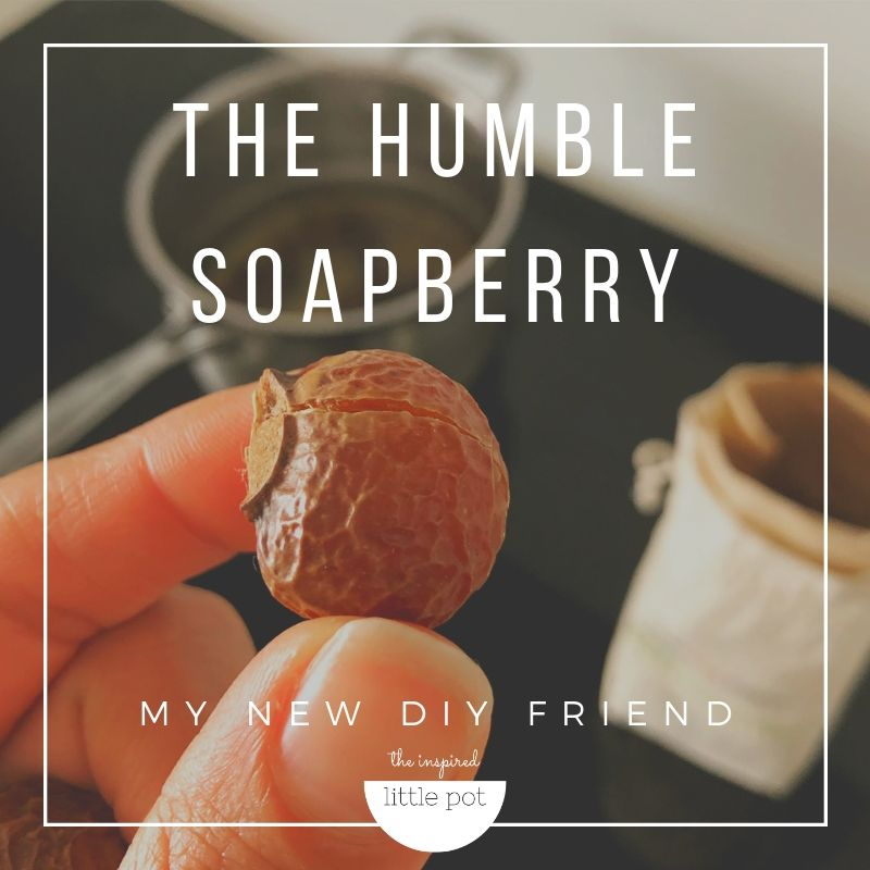 Soapberries | The Inspired Pot