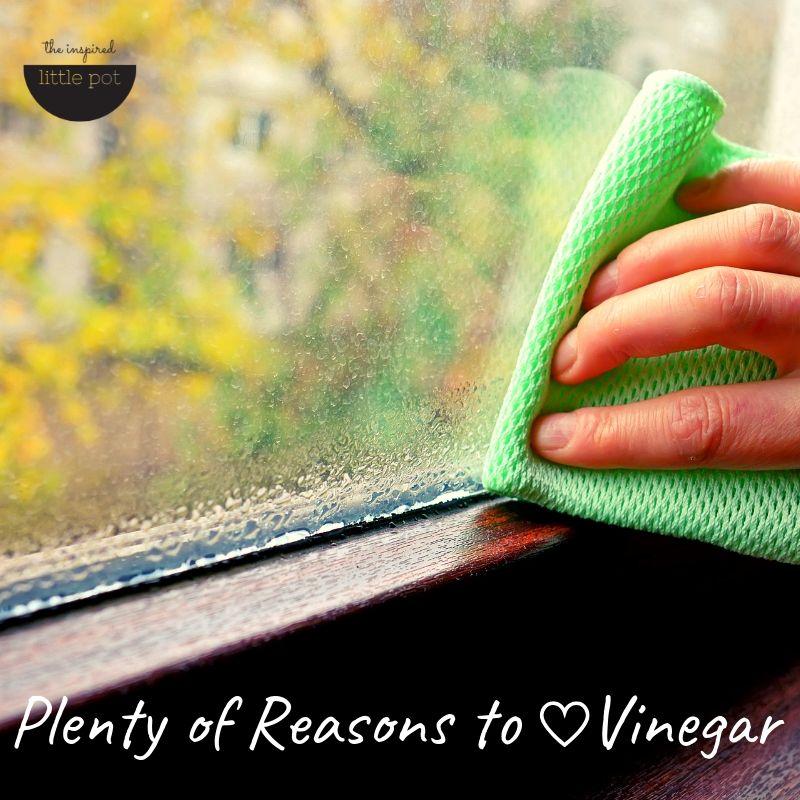 Plenty of reasons to love vinegar | The Inspired Little Pot