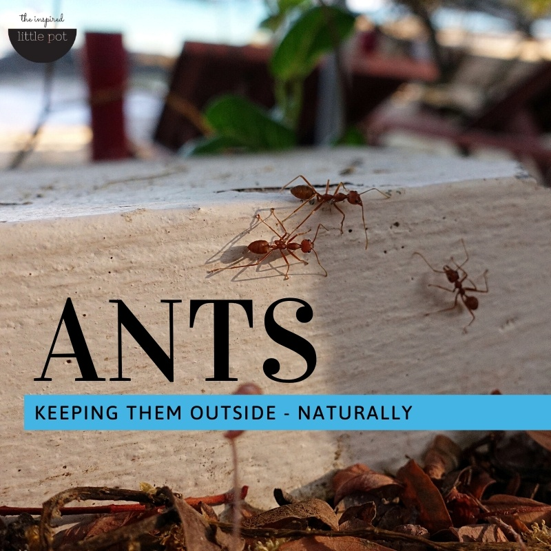 Keeping ants outside – naturally